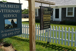pet friendly martha's vineyard sea breeze vet animal clinic